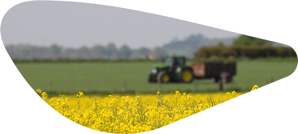 View of Tractor over Yellow Field (Cropped)